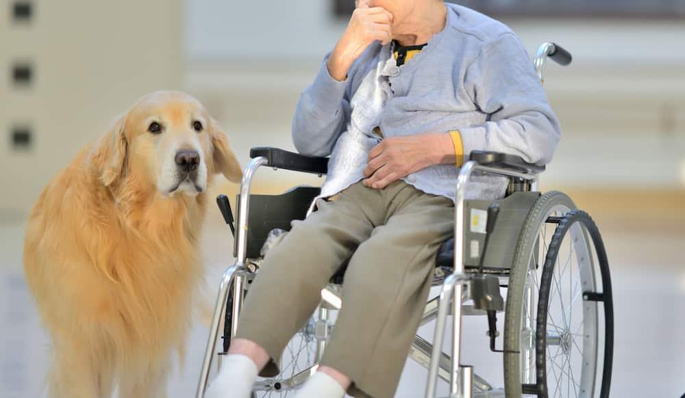 車椅子に乗った高齢の女性と介助犬