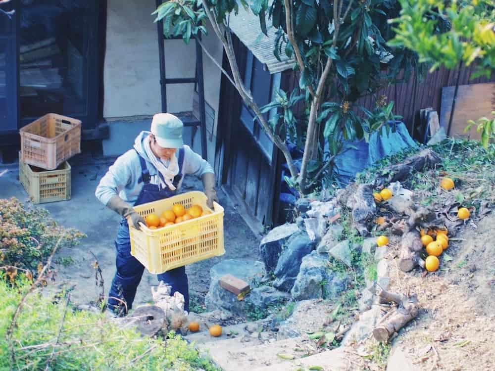 畑仕事をする離島の訪問看護師